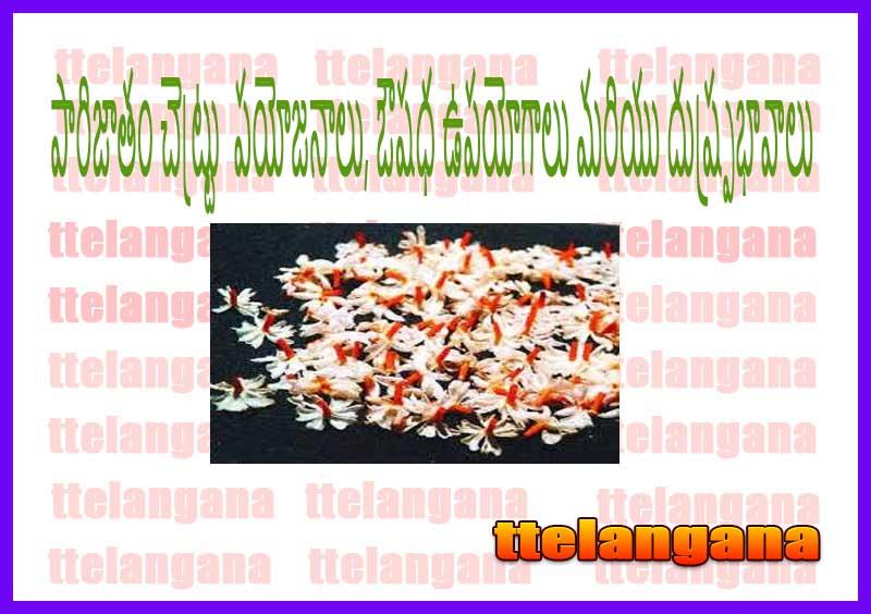 పారిజాతం ప్రయోజనాలు, ఔషధ ఉపయోగాలు మరియు దుష్ప్రభావాలు