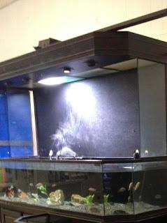 Giant Aquariums: 500 Gallon Aquarium and Stand   $1500 (Anderson, SC)