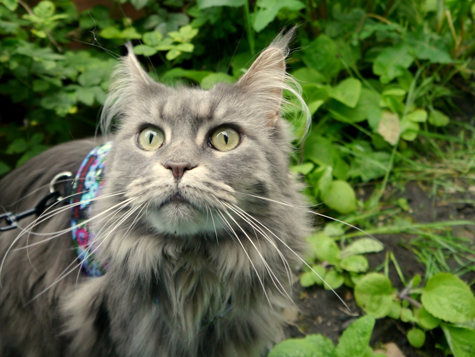 Wild Kitty 5, 30 May 14 by Castaway in Scotland from flickr (CC-NC)