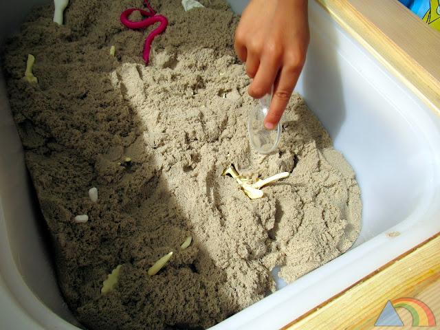 Fósiles de dinosaurio escondidos en arena kinética