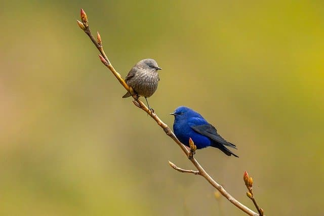 two birds on a tree branch