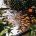 Αναρτήθηκαν τα πορίσματα από ζημιές σε εσπεριδοειδή και ελαιόδεντρα  στο Δήμο Αρταίων