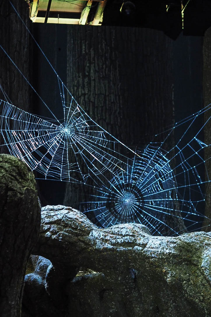 Giant spiderwebs in Forbidden Forest at Harry Potter Warner Brothers Studio Tour