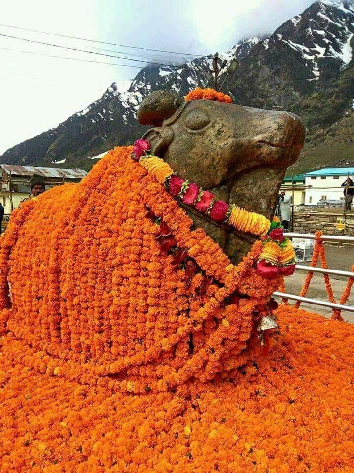 Nandi at Kedar Dham