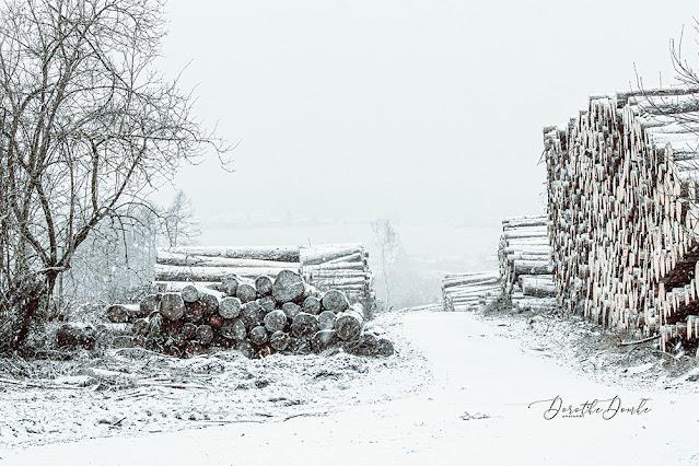 Schneefall, snowing, Sauerland