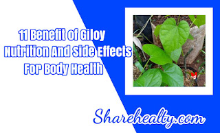 11 Benefit of Giloy, Nutrition And Side Effects fo Body Health