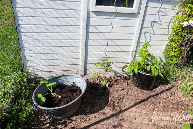 Garten mit Tomaten