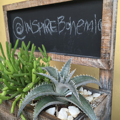 cactus, succulents, garden planters, succulent planters, Miami succulents, gardening, nature, plants, Miami, Miami garden business, garden design, Inspire Bohemia