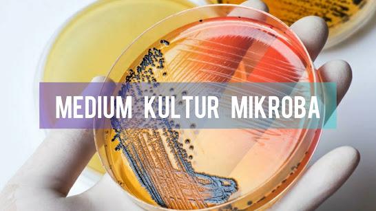 Medium Kultur Mikroba