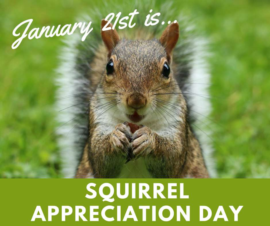 National Squirrel Appreciation Day Wishes For Facebook