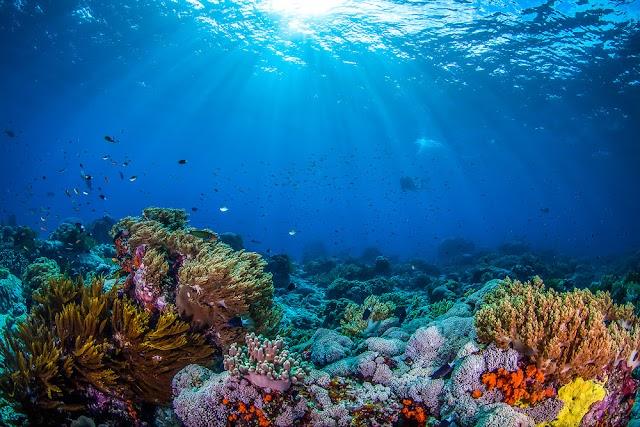 El océano podría ser clave para la seguridad alimentaria futura