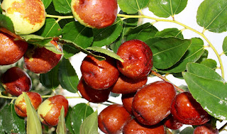 Secret 15 Benefits of Bidara Fruit Plants for Health and Beauty - Healthy T1ps
