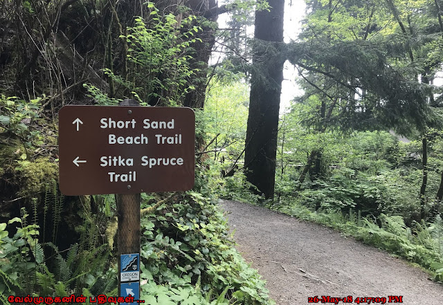 Short Sand Beach Trail Oregon