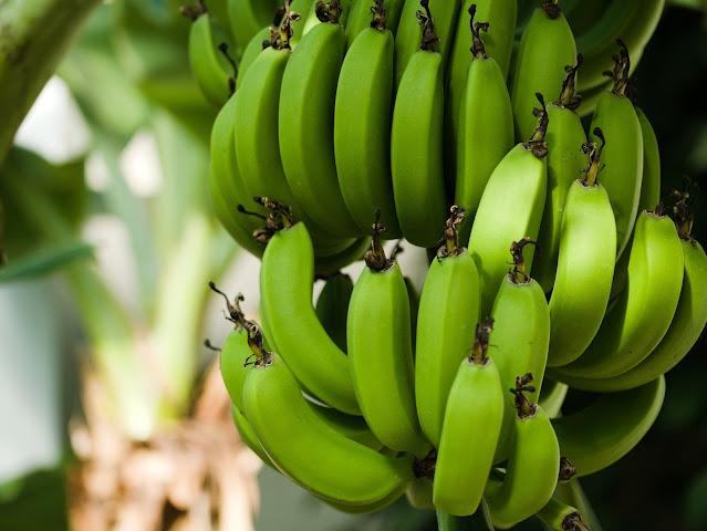 bananas 3528314 1920