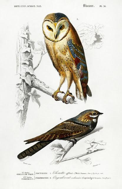https://www.rawpixel.com/board/77996/dictionnaire-universel-dhistoire-naturelle-free-cc0-public-domain-images
