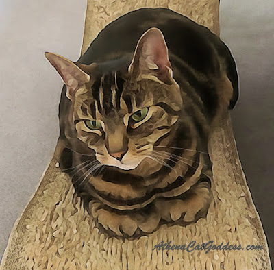 tabby cat arty