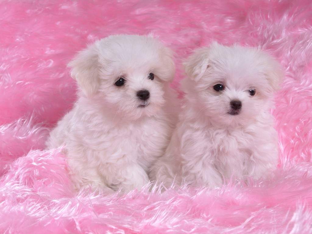 LAP TOP VALLEY: Pink Puppy - Wallpaper - photo#32