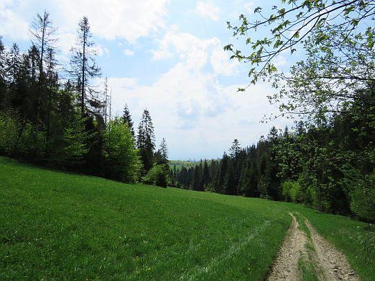 Z przełęczy do doliny Potoku Chorów.
