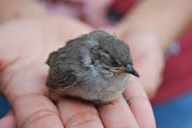 Segera atasi burung sakit agar tidak mati