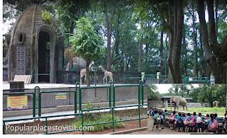 Visit Jakarta Ragunan Zoo Pasar Minggu