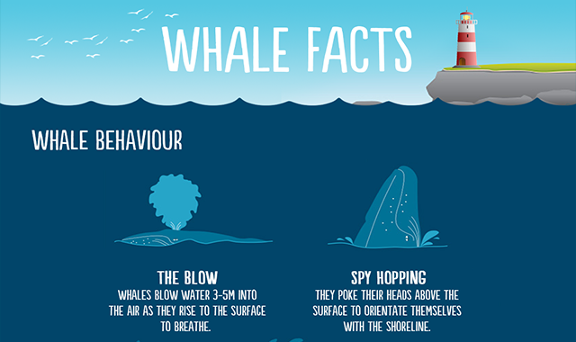 Amazing Facts About Whale That Will Blow Your Mind #infographic