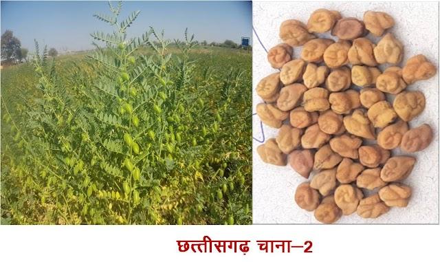 कृषि विश्वविद्यालय द्वारा विकसित विभिन्न फसलों की आठ नवीन किस्मों को भारत सरकार की मंजूरी