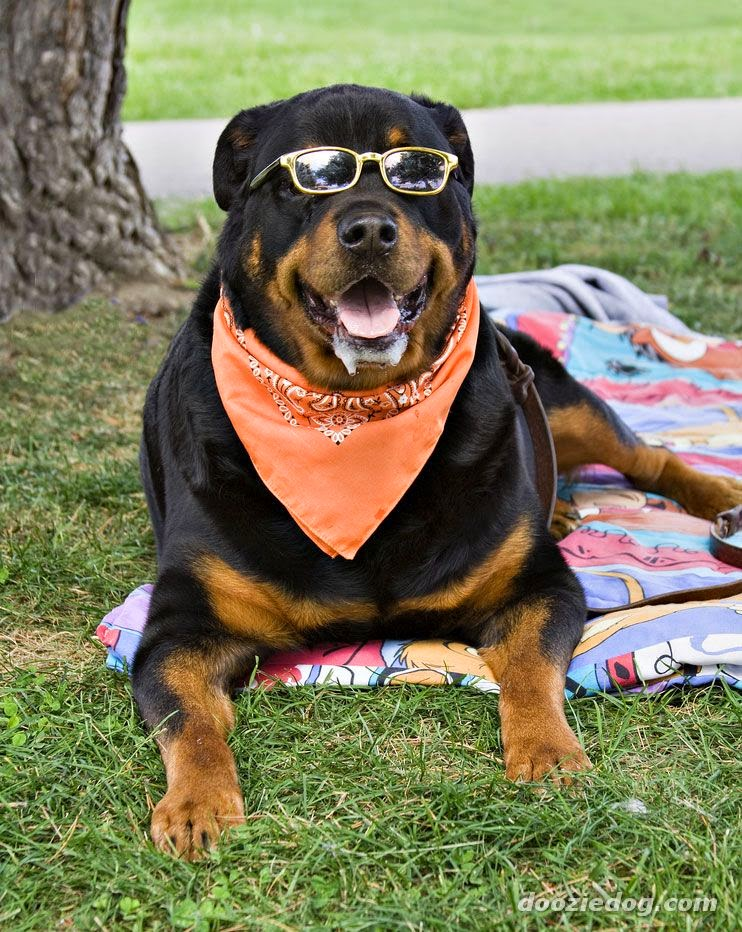 German Female Dog Names For Rottweilers