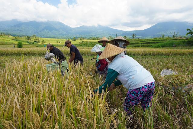 Rekomendasi Wisata di Ubud dan Bedugul yang Menerapkan Protokol CHSE 7