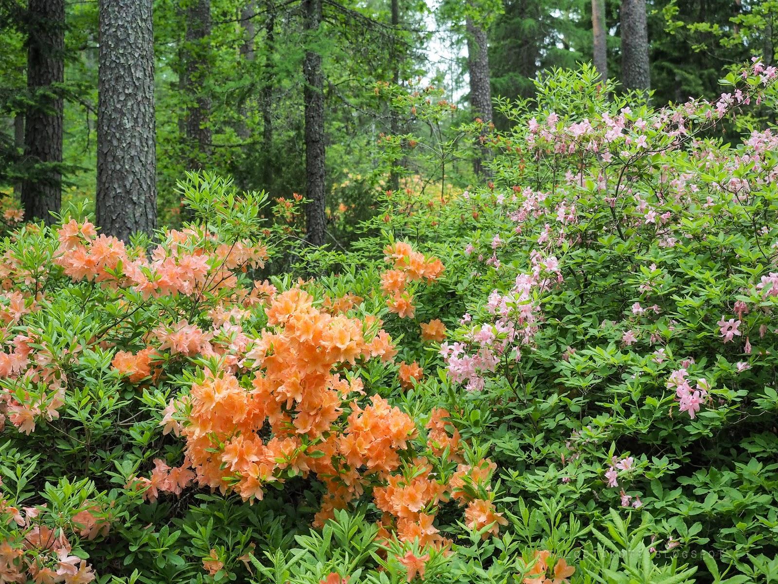 arboretum mustila