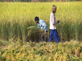 India & Fiji to Co-operate in Agri and Allied Sectors