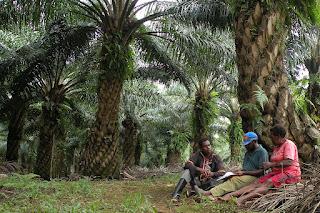 Aktivis Lingkungan Desak Moratorium Sawit Diperpanjang