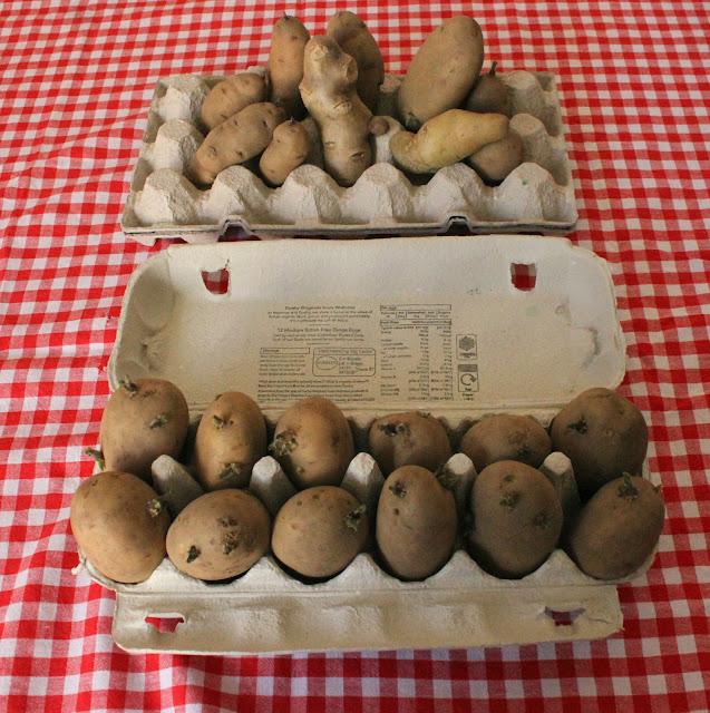 potatoes in egg cartons