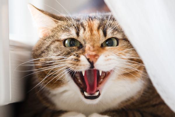7 أشياء تكرهها القطط في البشر