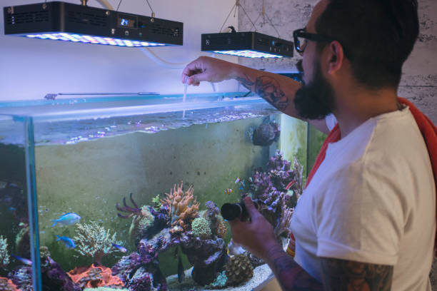 How to Set Up a Saltwater Aquarium – Step by Step