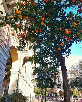 Drzewka pomarańczowe na ulicy