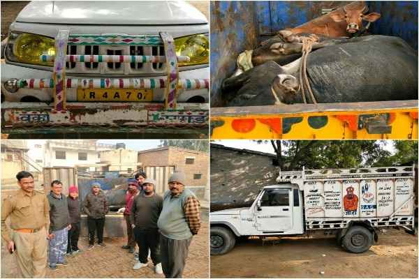 gau-task-nuh-and-bajrang-dal-manesar-caught-gau-taskar-vehicle-news