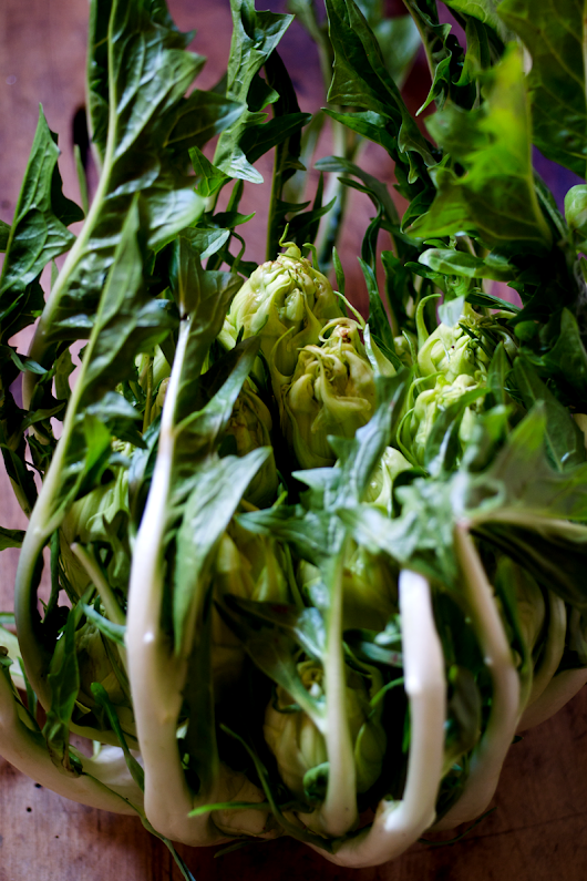 Puntarelle | Cook (almost) Anything at Least Once