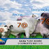 Conheça o Sistema de produção de bovinos 777 que gera economia de até 30%