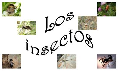 http://ceiploreto.es/sugerencias/cplosangeles.juntaextremadura.net/web/curso_3/naturales_3/insectos/insectos.html