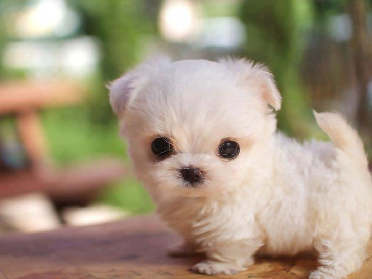 Cute Puppy of National Dog Day 2019