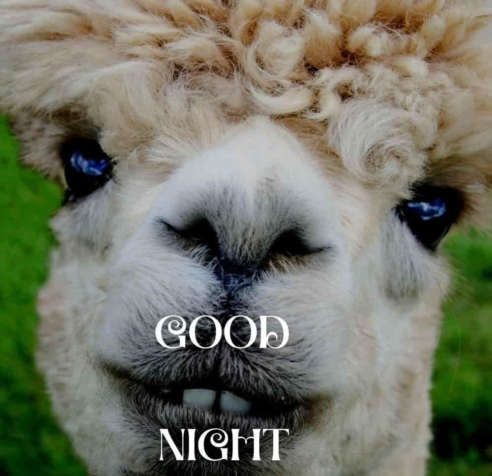 funny-good-night-image