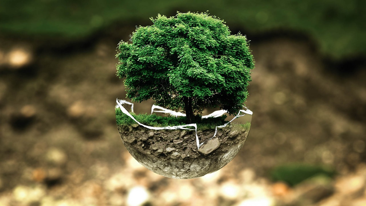 Aqua Bonsai What Is It And How To Grow Bonsai Trees For Beginners
