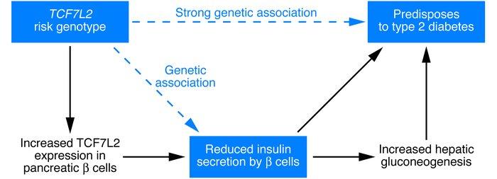 factores geneticos asociados a la diabetes