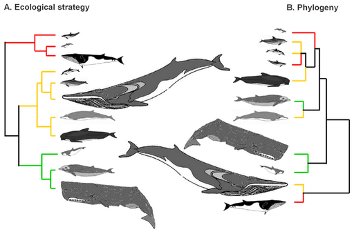 baleen whales essay An essay on the factors affecting mammal population in the neotropics and the challenges managing these populations  the calls of baleen whales.