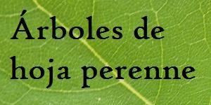 Rboles plantas riomoros for Arboles frutales de hoja perenne