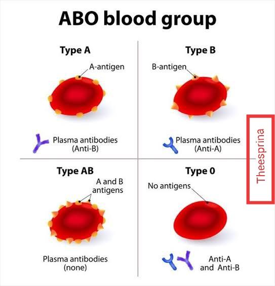 ما هو اختبار فصائل الدم وما هو اختبار عامل ريسيس؟ - { ?What are blood type and Rh test }