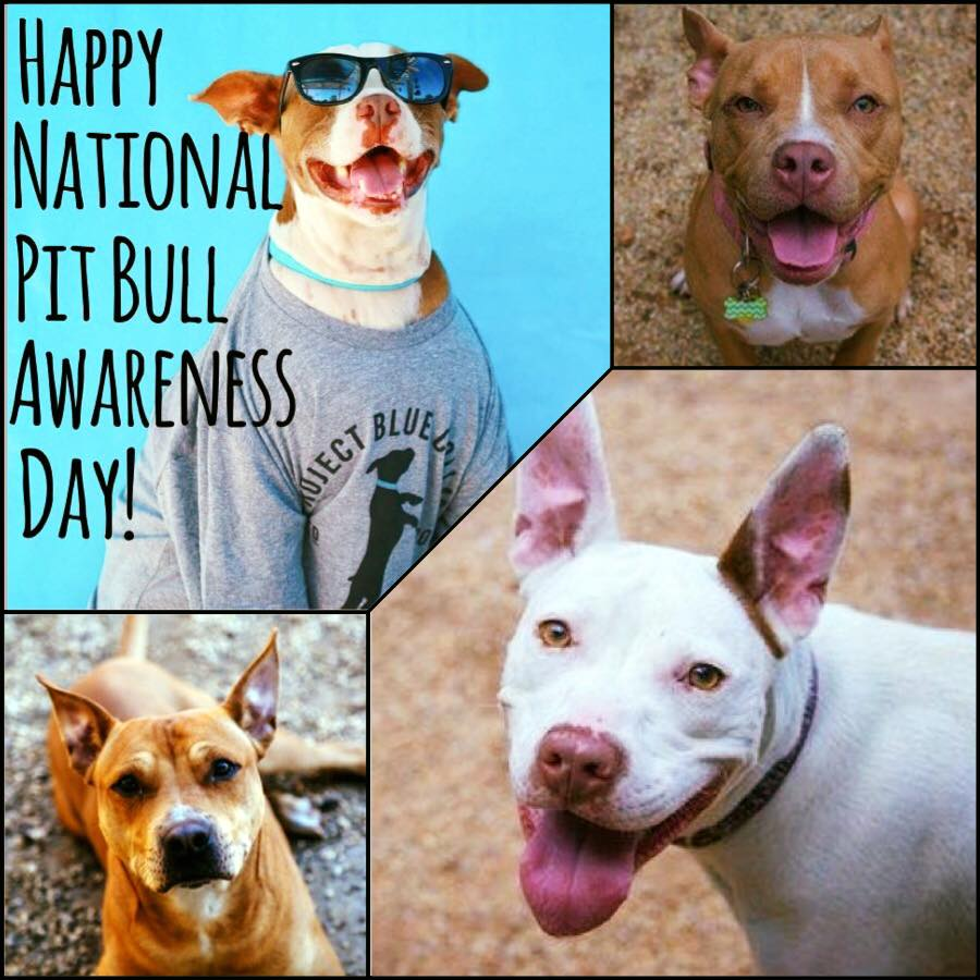 National Pit Bull Awareness Day Wishes Photos
