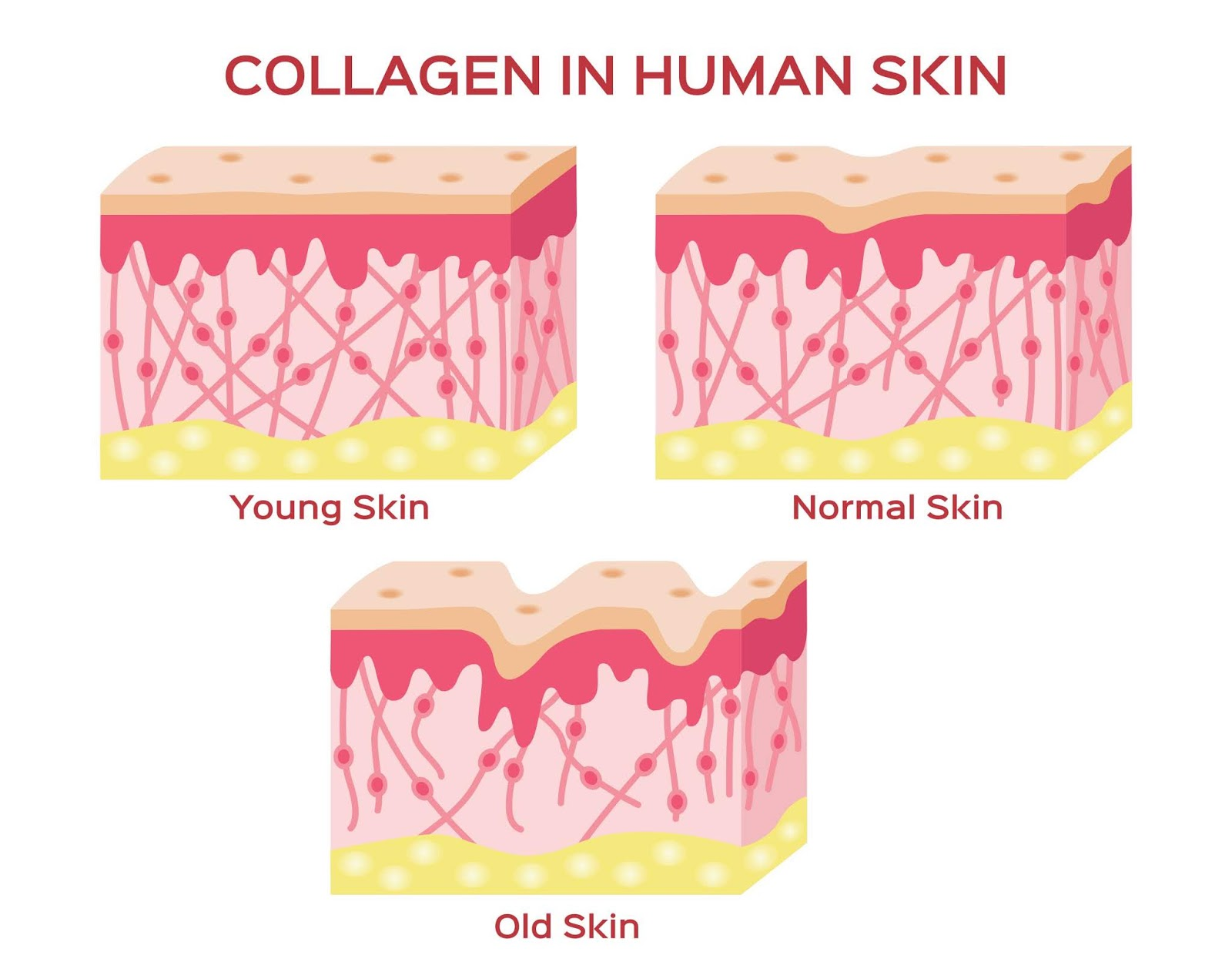 9 Natural Ways to Boost Collagen Production in the Body