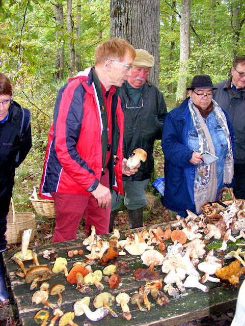 An expert pharmacist/mycologist conducting a public outreach fungi education session.  Indre et Loire, France. Photographed by Susan Walter. Tour the Loire Valley with a classic car and a private guide.
