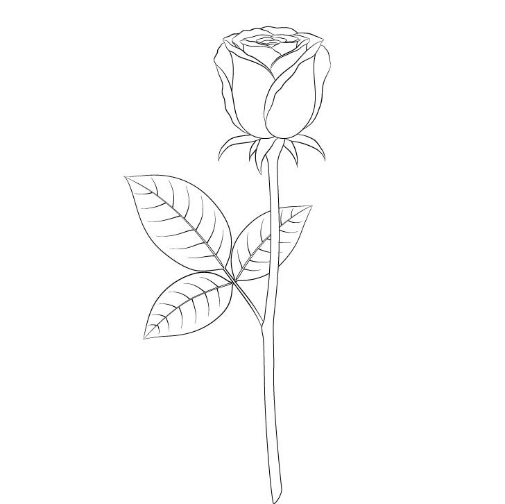 Gambar garis mawar penuh
